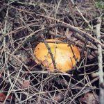Grzybobranie piękno natury grzyb ukryty z zaroślach