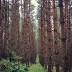 Grzybobranie piękno natury las otwiera przed nam swoje wrota