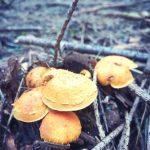 Grzybobranie piękno natury piękno lasu jest ogromne grzyby pokazują swój czar